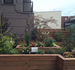 Raised gardens in wooden boxes